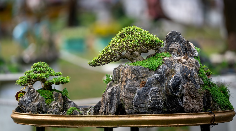 how to care for your bonsai tree