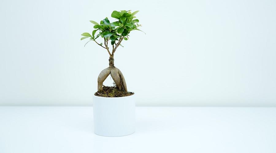 Placing your bonsai tree