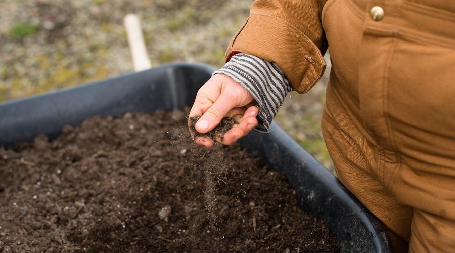 checking soil moisture