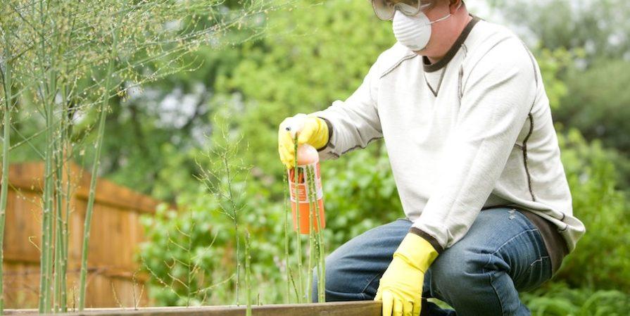 Man in PPE fertilizing plants