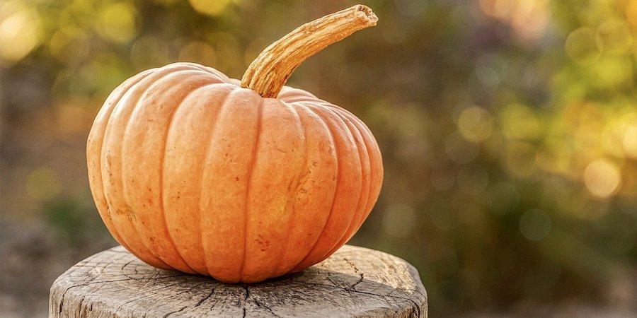 Pumpkin on a stump