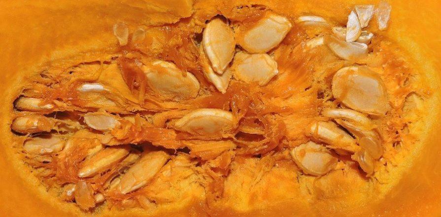 Close up of pumpkin guts