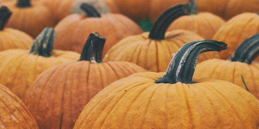 Numerous orange pumpkins