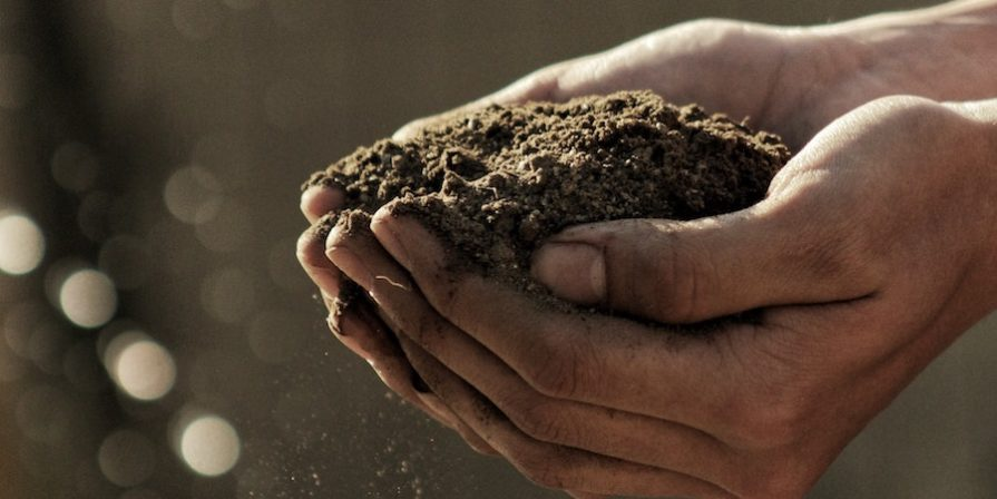 Pair of cupped hands holding soil