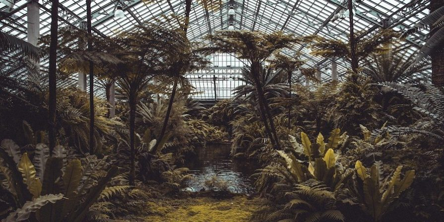 Jungle greenhouse filled with tropical plants