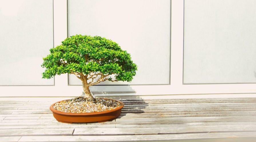 simple bonsai tree