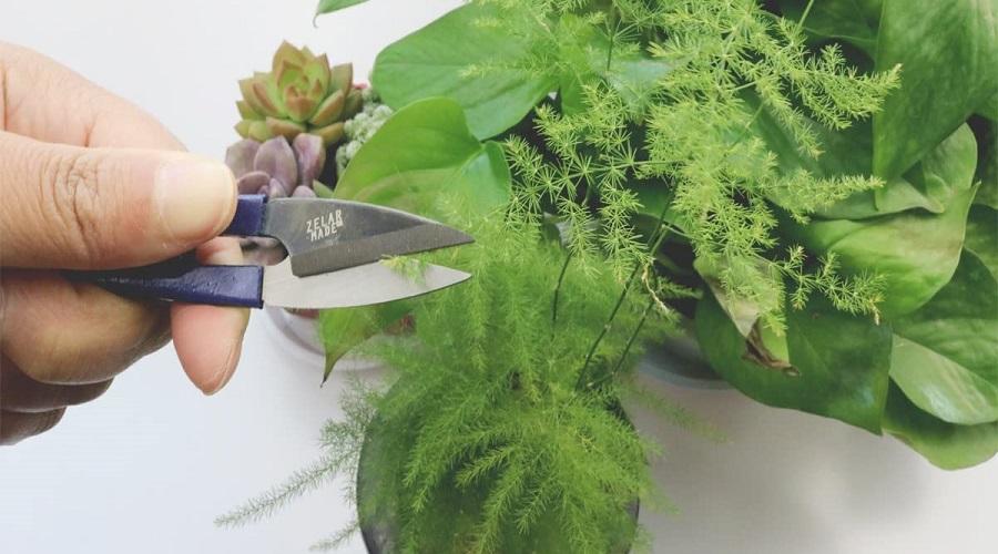 Bonsai toolset from ZELARMAN Store