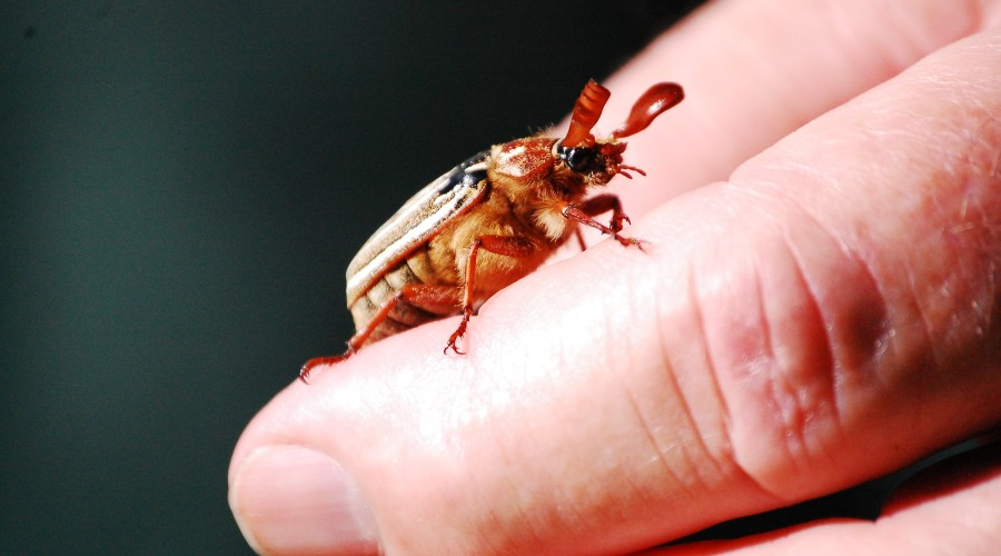 bug on person's finger