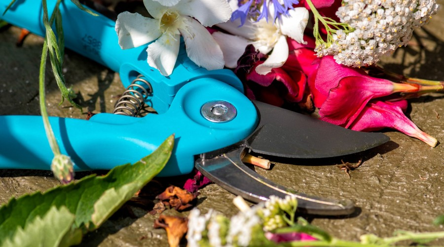 a blue pair of pruning sheers surrounded by flower cuttings