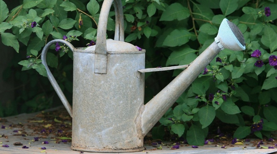 a watering can sitting in front of a garden