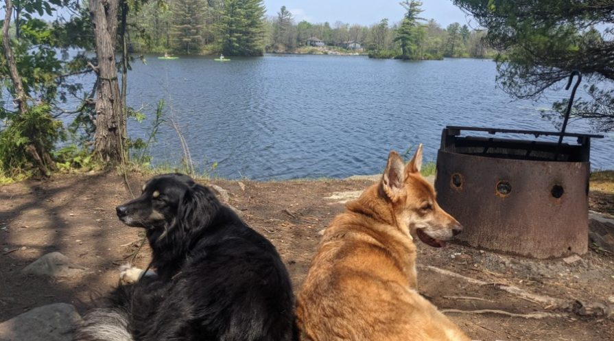 two dogs laying next to each other beside a fire pit
