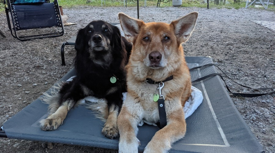 two dogs laying on a portable dog bed