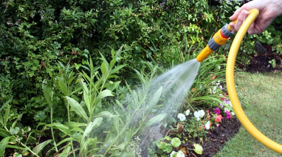 a person watering the garden with a yellow garden hose
