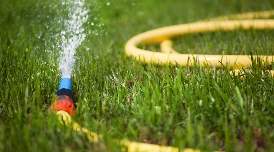 a yellow garden hose laying in the grass, spraying water