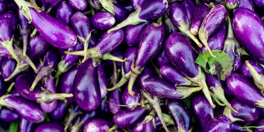 Many beautiful purple eggplants