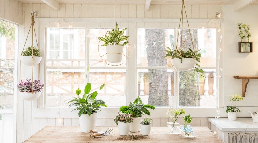 a collection of indoor planters including wall planters, hanging planters and plant pots
