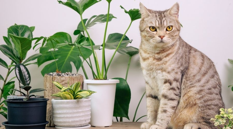 silver tabby cat sitting next to several house plants