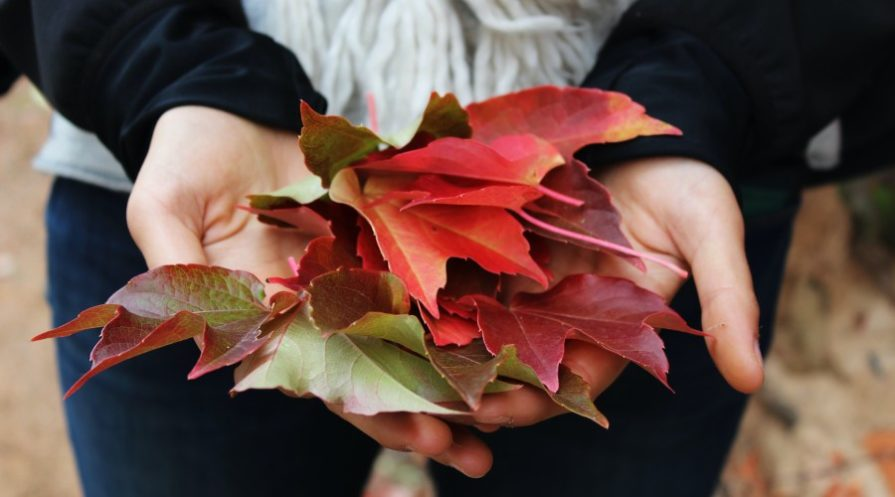 a woman holding a pile of colored fall leaves