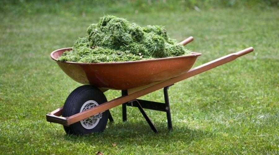 wheelbarrow full of grass clippings